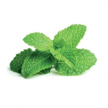 Peppermint for the GI Tract